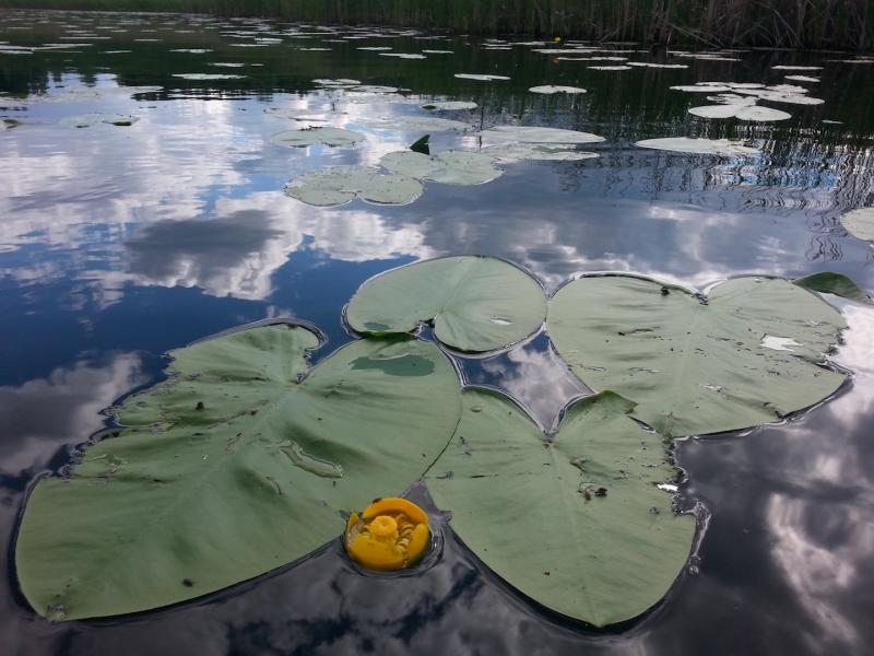 Warto ryzykować i zapuścić się głębiej w lilie